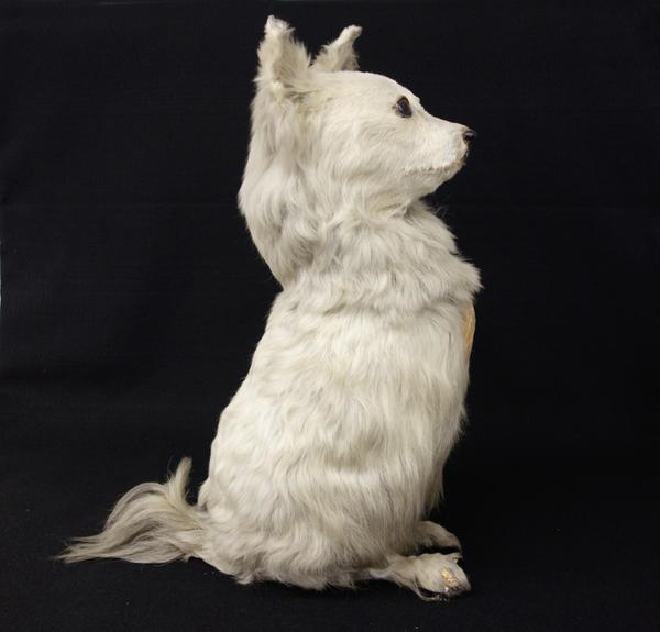 Thomas Barnett's taxidermied dog, Skipper